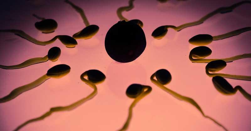 Plodni dani i ovulacija