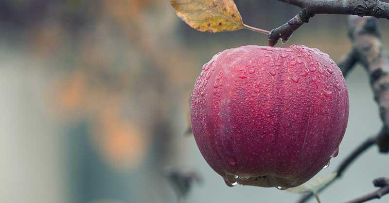 jabukovo sirće za kosu upotreba