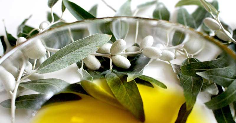 maslinovo ulje protiv bora