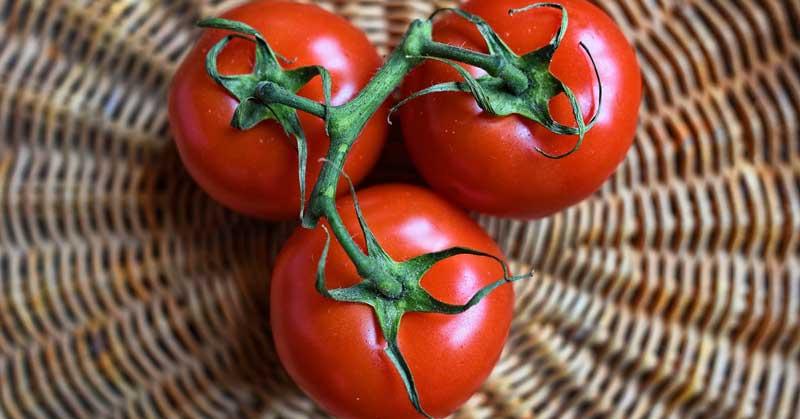 paradajz za vene