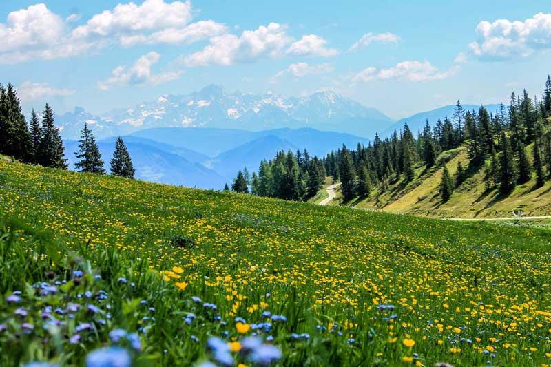 Alpska krema za vene