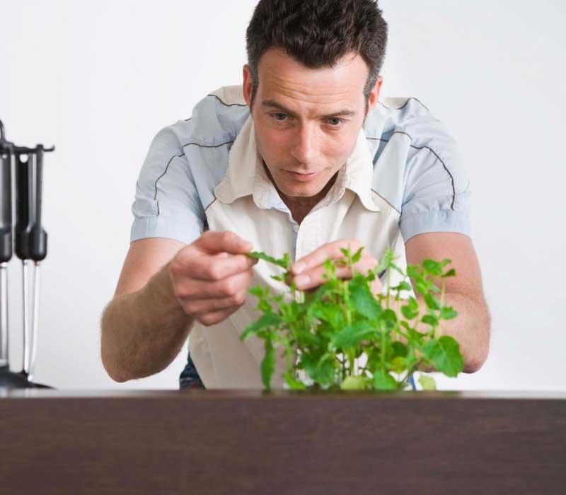 biljke protiv opadanja kose
