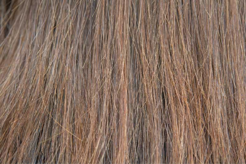 suva i oštećena kosa